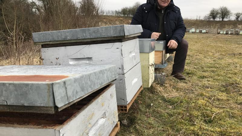 apiculteur wizernes