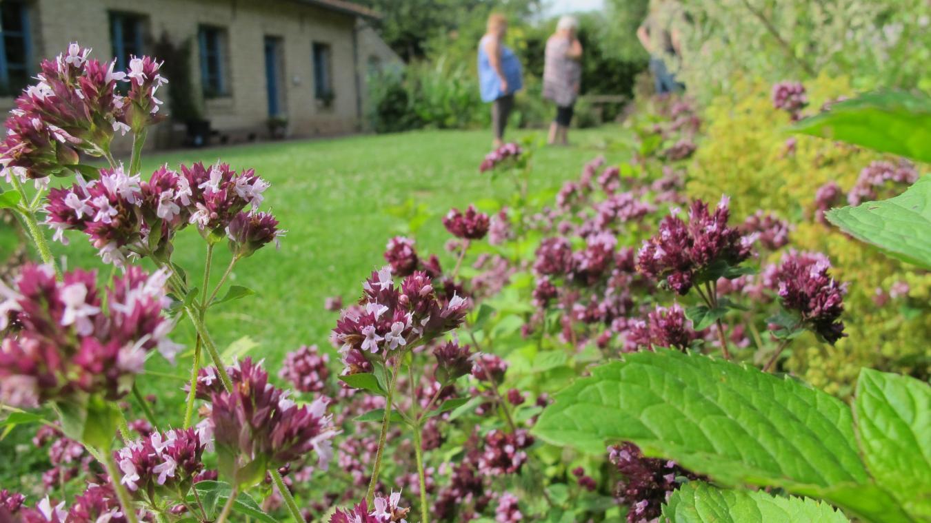 Cette petite fleur violette est celle de l origan, une plante aux vertus  anti 91c75aea747