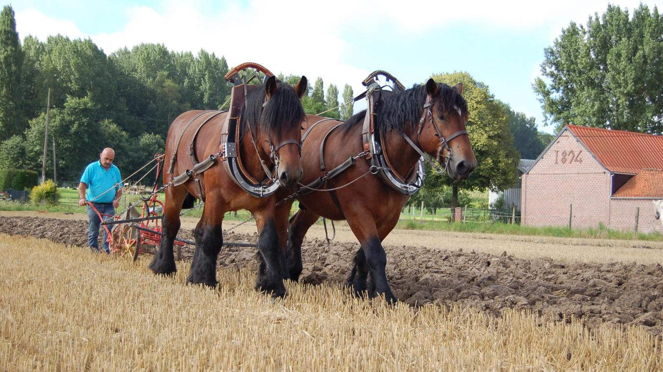 cheval de trait labour