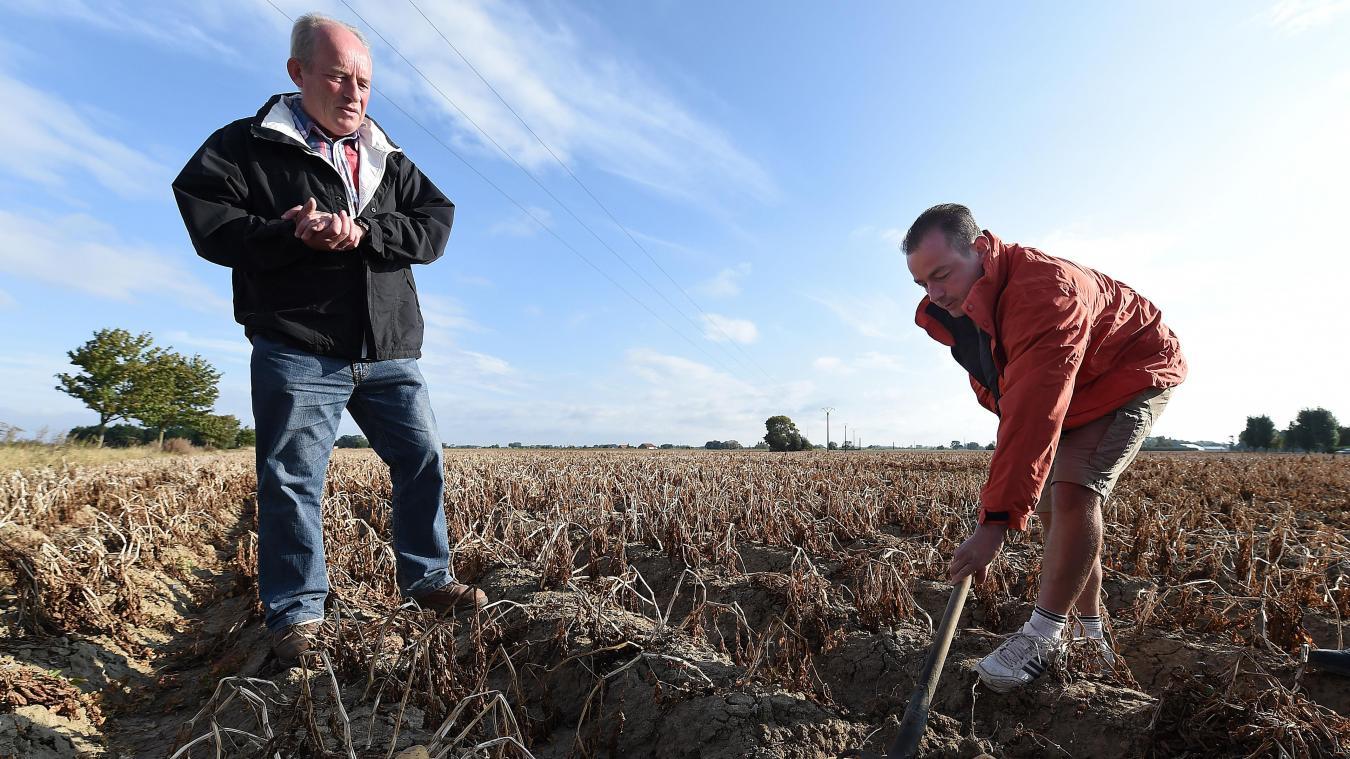 Prix Caisse A Pomme agriculture les producteurs de pommes de terre redoutent une