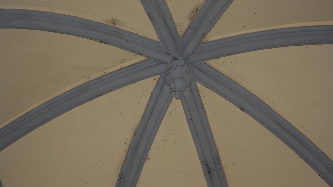 invasion de moucherons problme de mouches dans un la preuve de luinvasion des mouches bleues. Black Bedroom Furniture Sets. Home Design Ideas