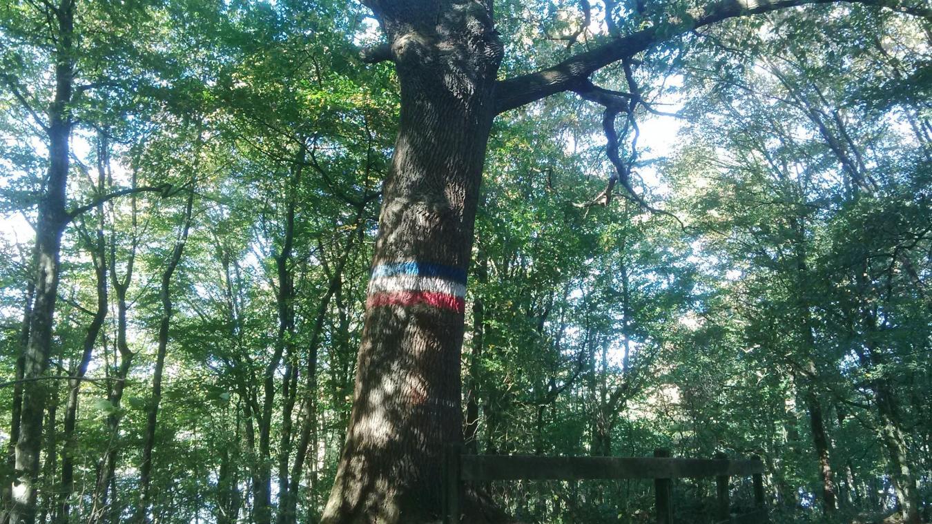 EPPE-SAUVAGE Le chêne Jupiter, arbre remarquable de la forêt du Val Joly