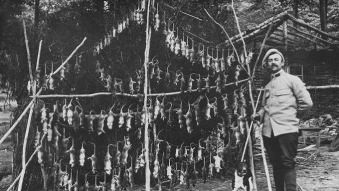 Des rats, attirés par la nourriture et les déchets, se promenaient dans les tranchées. Il a fallu trouver des moyens de les exterminer.