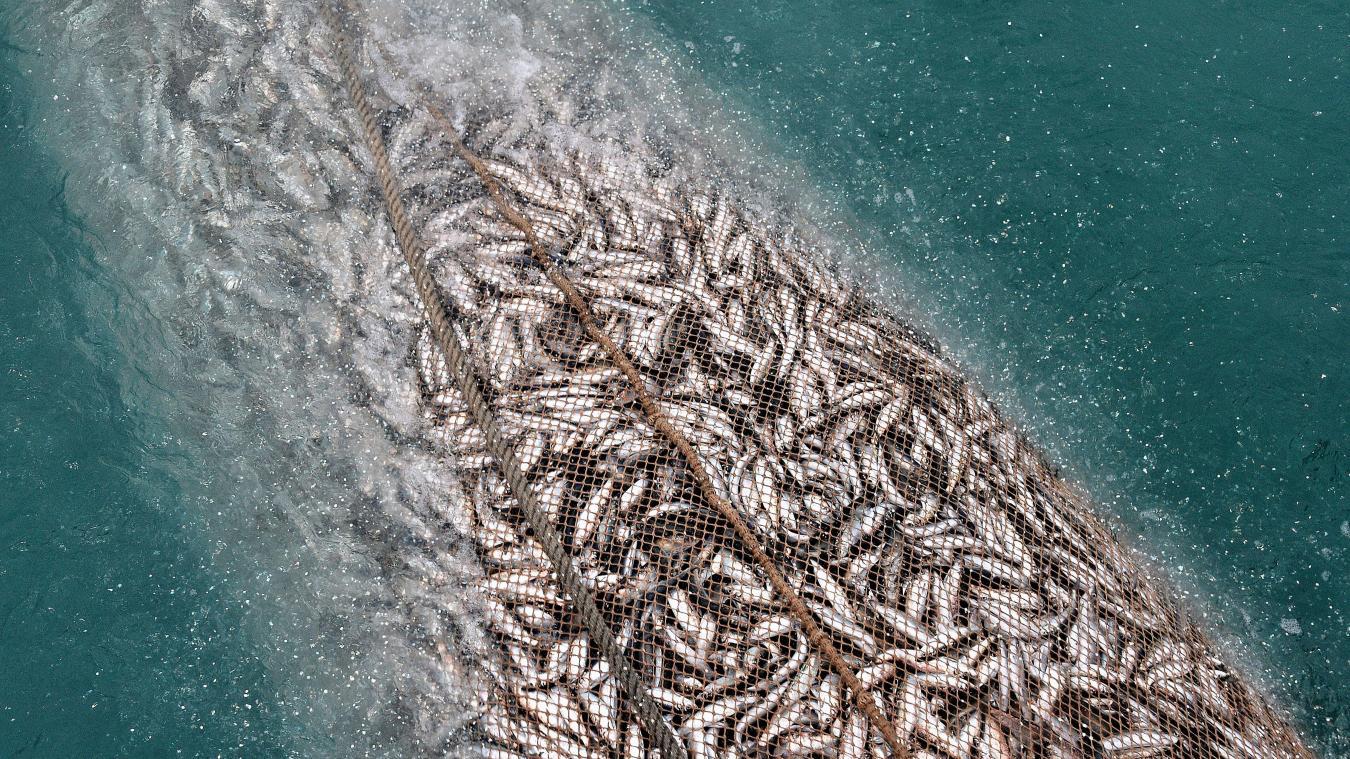 la peche aux poissons