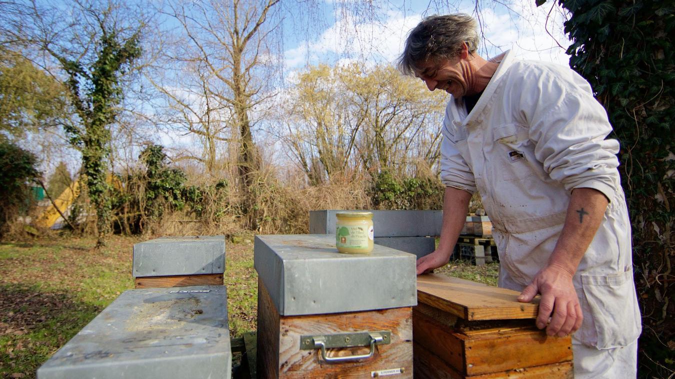 apiculteur hazebrouck