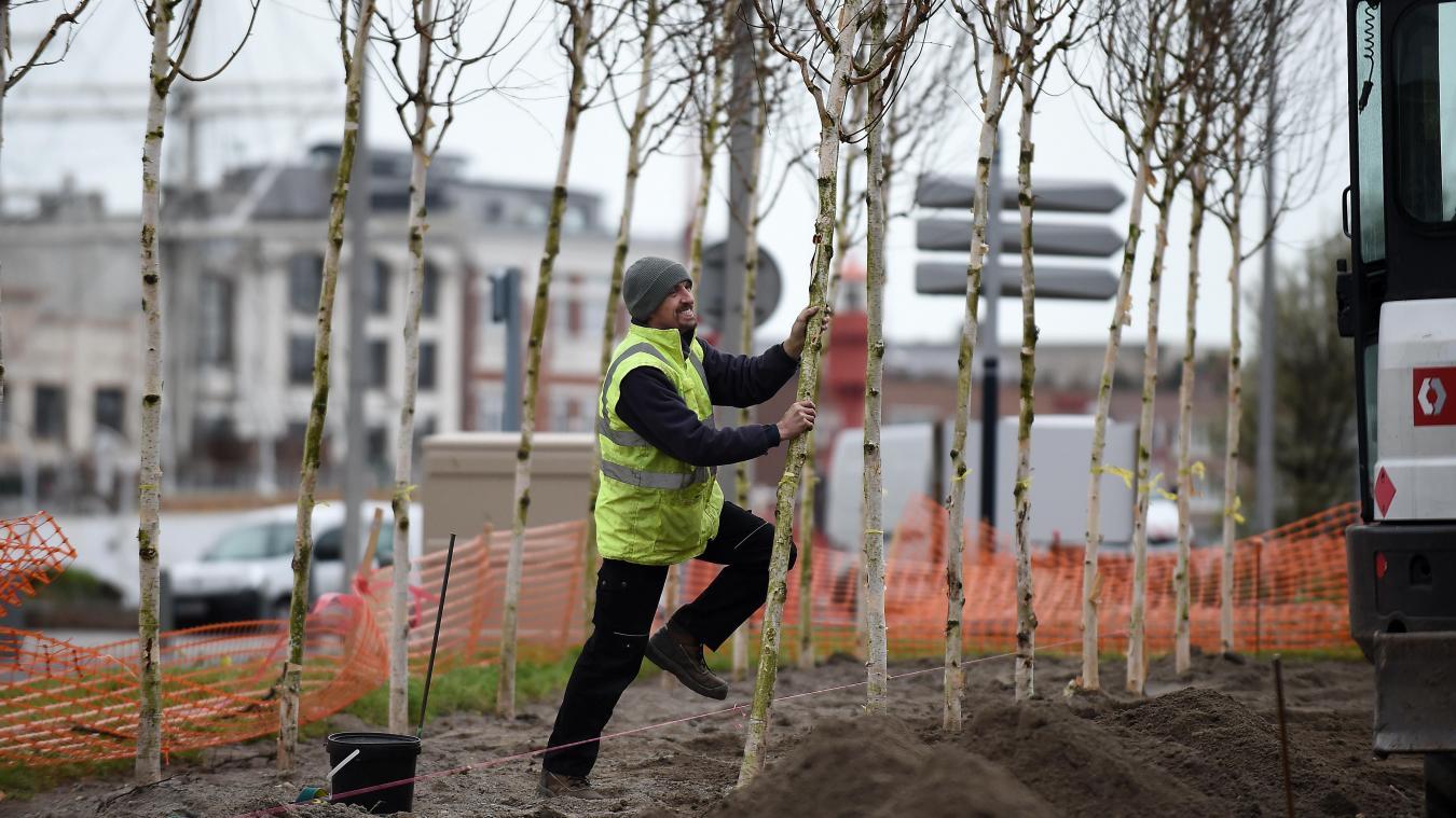 dunkerque: plan 10000 arbres: y'a du bouleau!