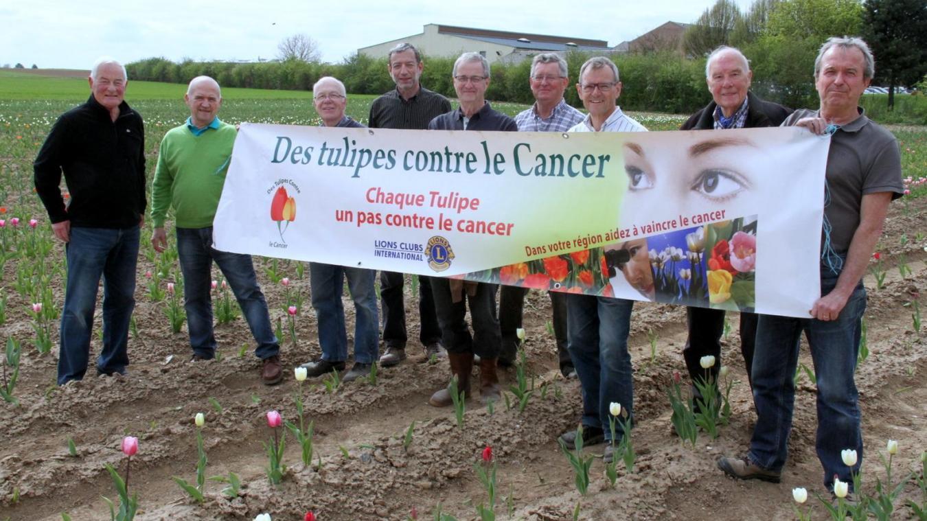 tulipe pour le cancer