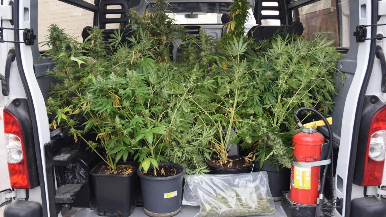 SAINT-OMER: Une culture de cannabis indoor découverte route de ...