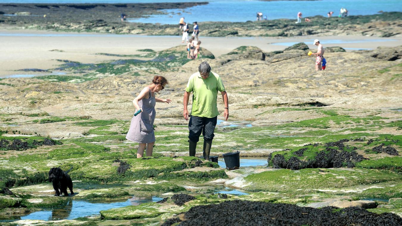 cÔte d'opale: une étude inédite sur la pêche aux moules dans la région