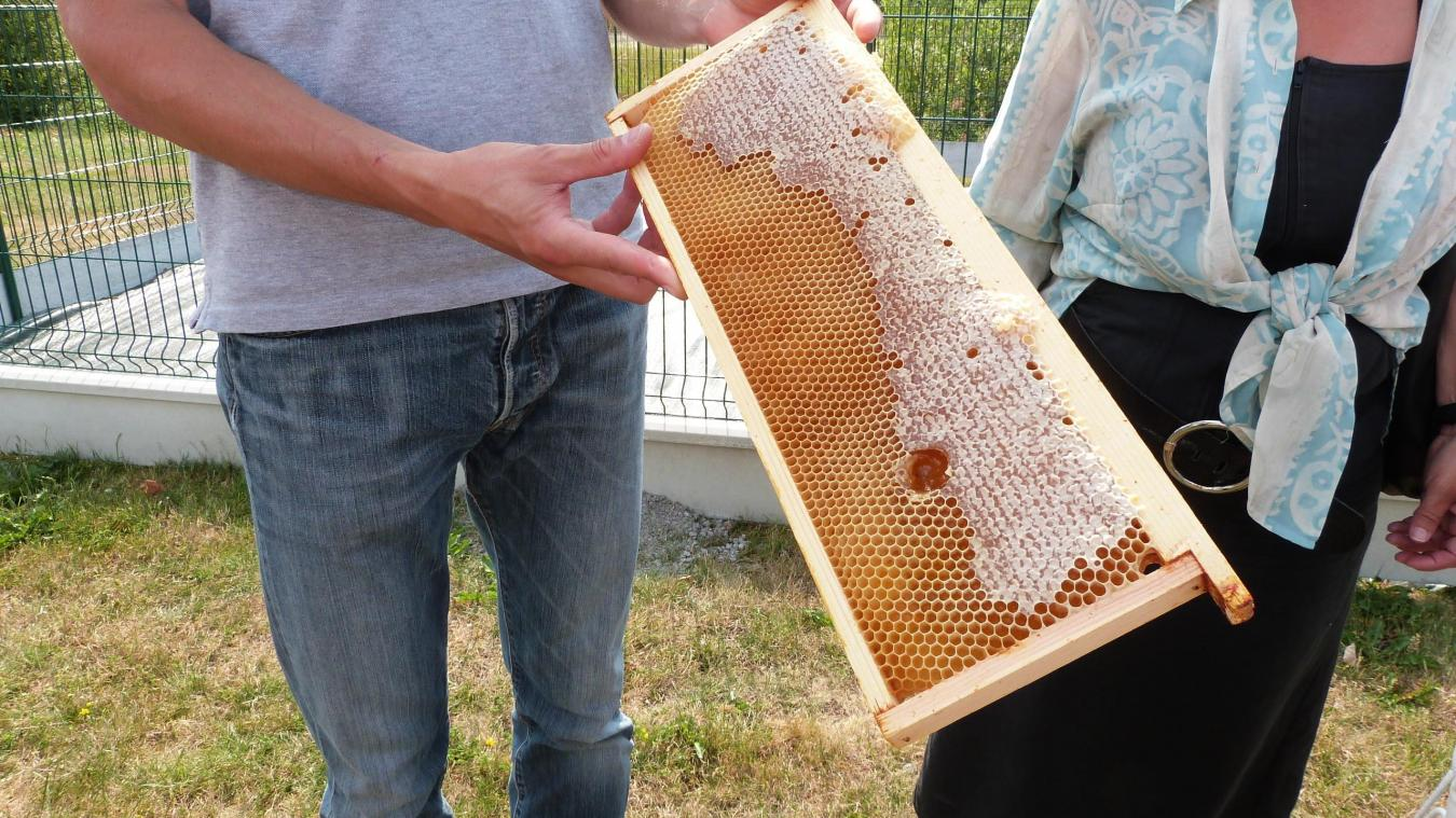 apiculteur 59230