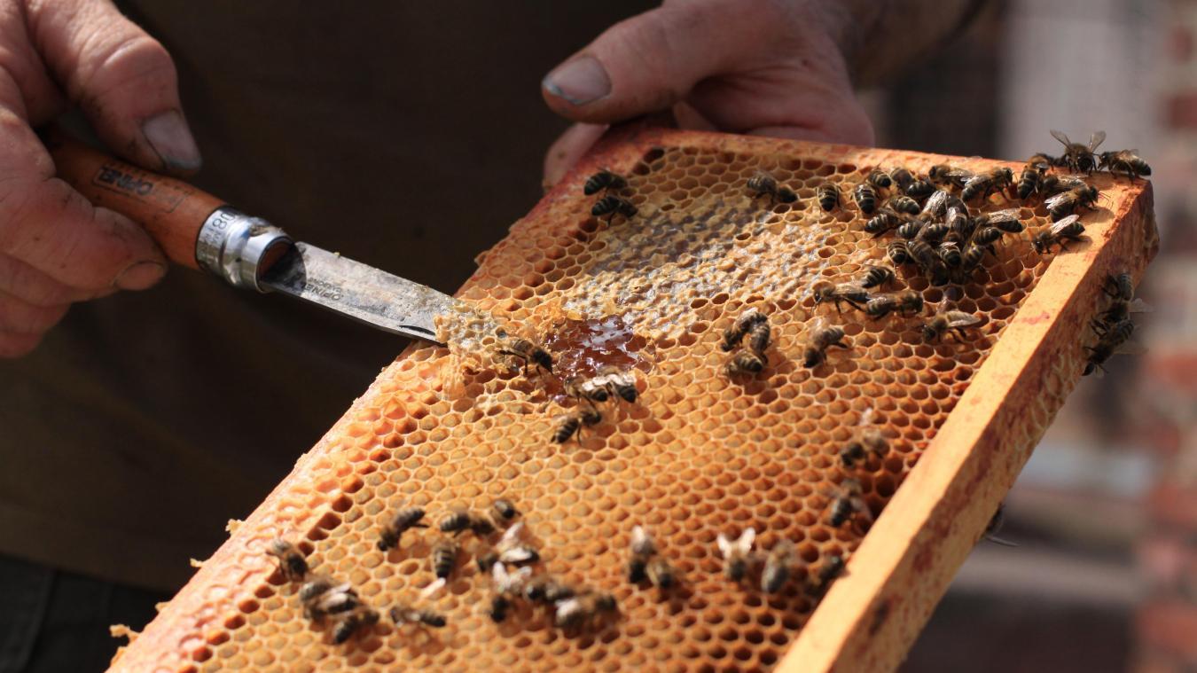 apiculteur orange