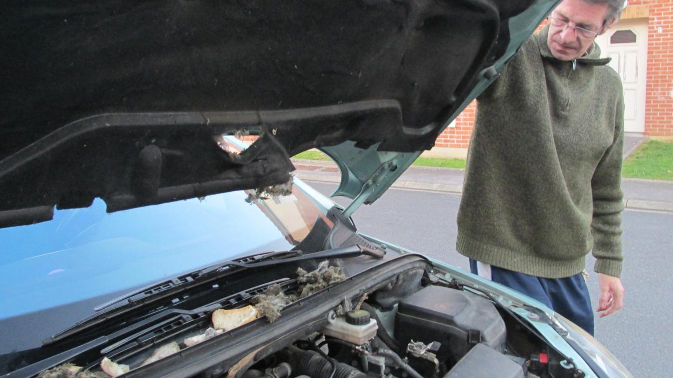 Cómo deshacerse de los ratones en su coche