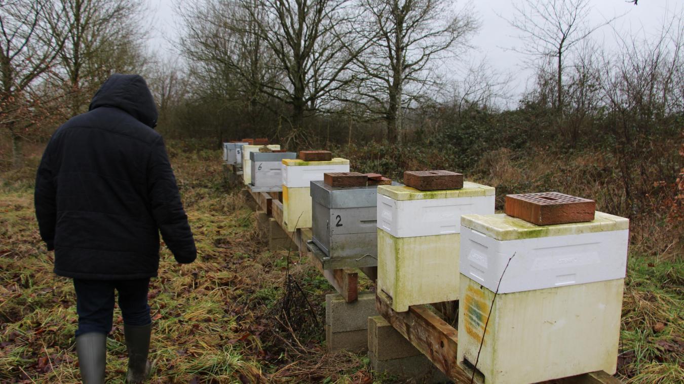 Les ruches de Didier Millet se trouvent à Wignehies, des individus se sont introduits sur son terrain dans la nuit du 30 au 31 décembre.