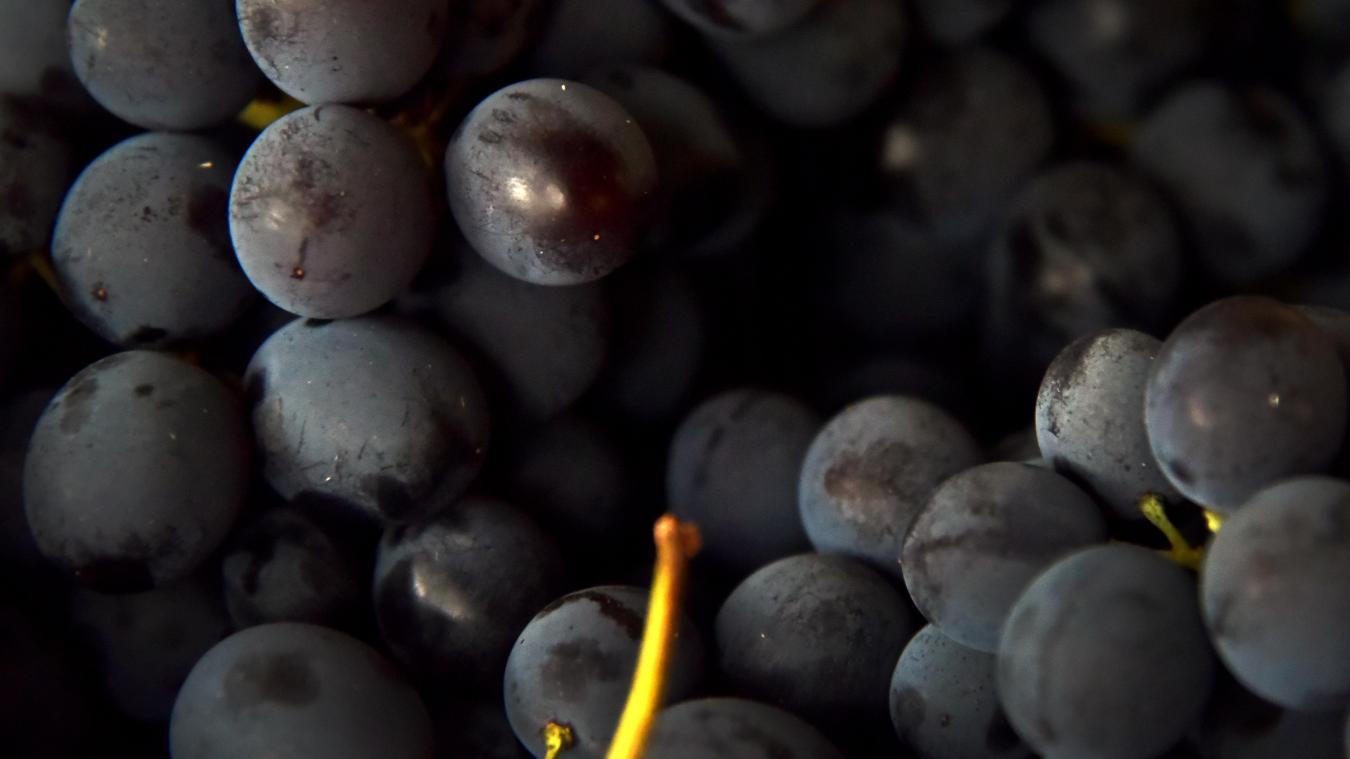 La liste des légumes et fruits les plus contaminés — Pesticides
