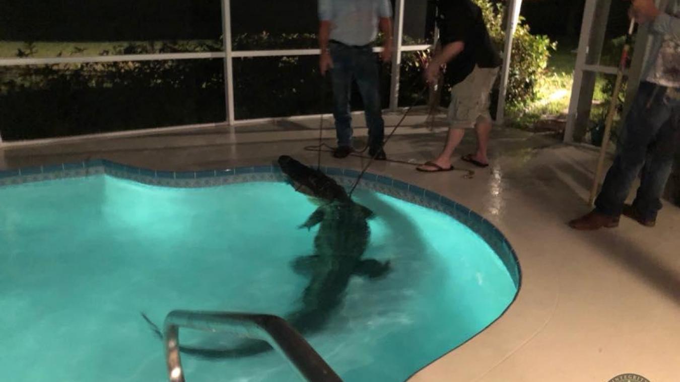 VIDÉO | Surprise, ils découvrent un alligator dans leur piscine