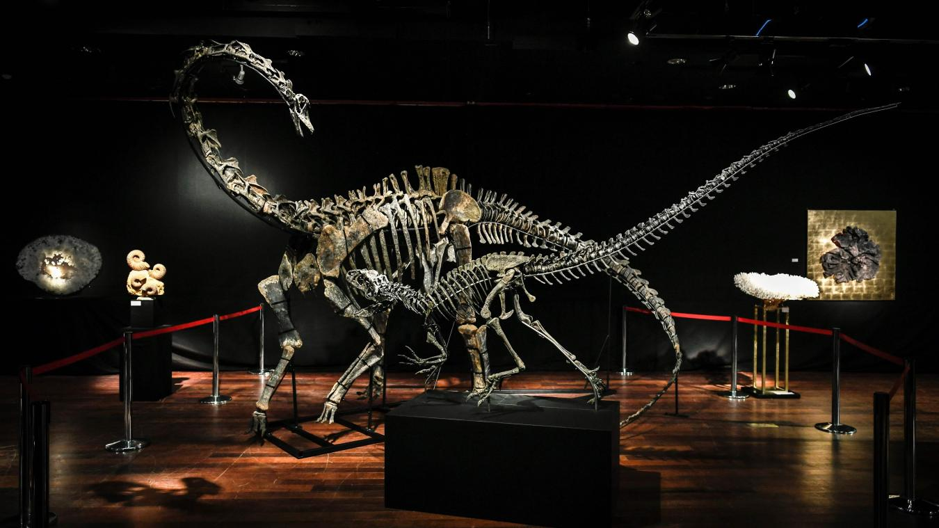 Deux squelettes de dinosaures vendus 2,2 millions$ chacun à Paris