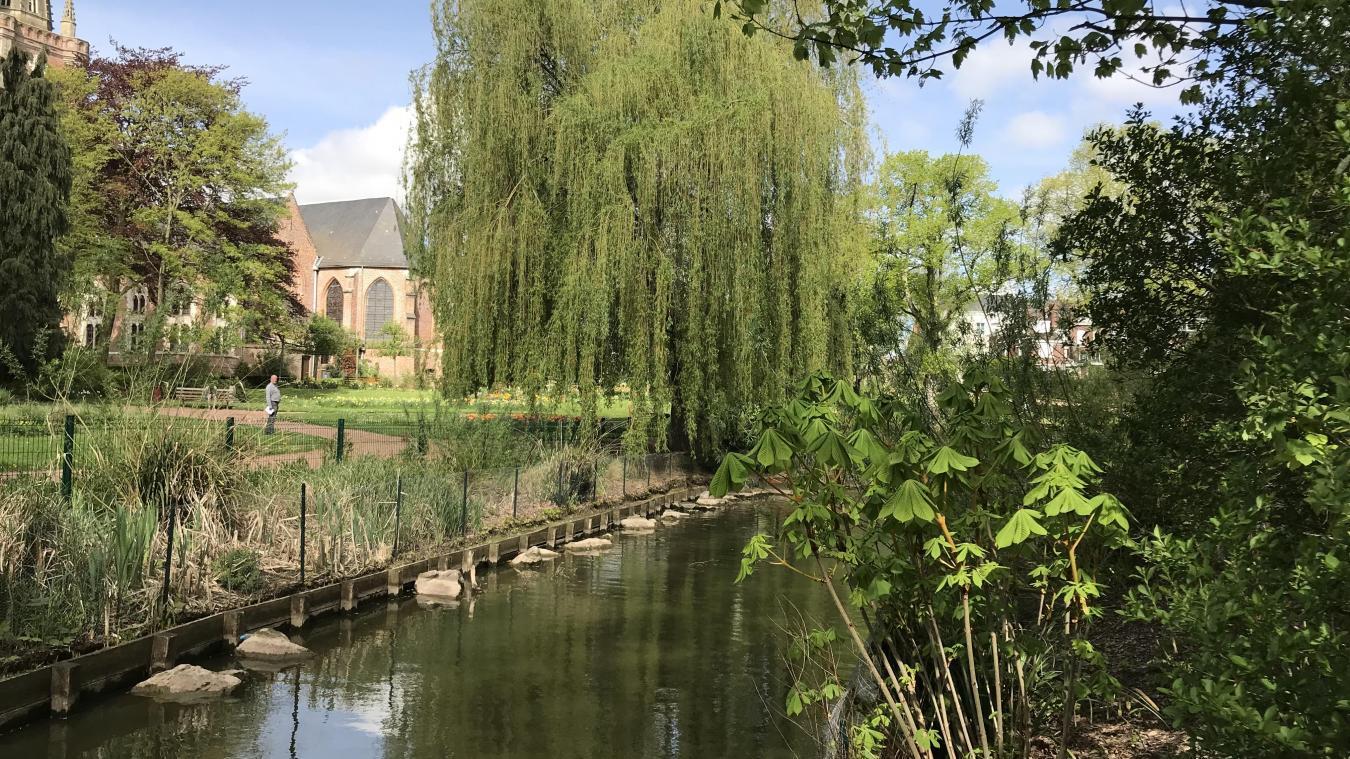 Hazebrouck : Le saule pleureur du jardin public va être abattu