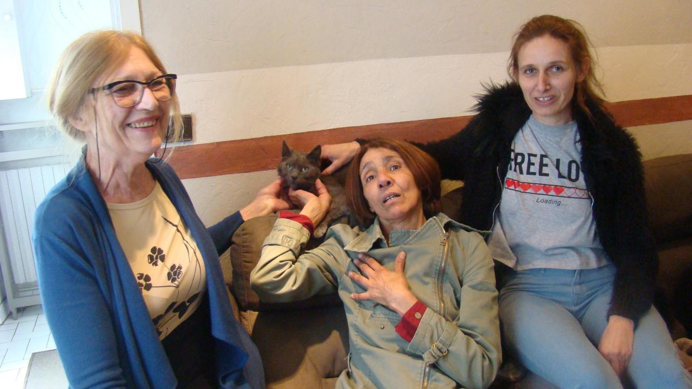 Disparu depuis un an de Belfort, un chat retrouvé à Pont-à-Vendin!