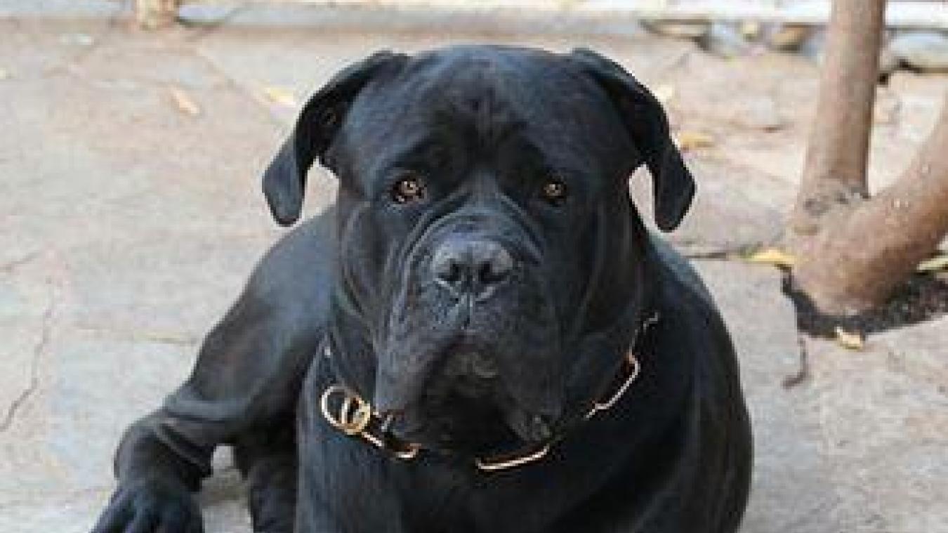 Quatre individus en garde à vue, soupçonnés d'avoir torturé te tué un chien — Pas-de-Calais