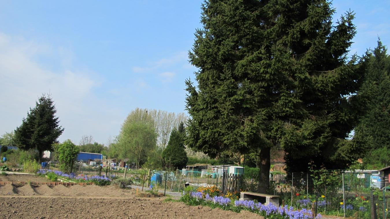Tourcoing l association des jardins familiaux veut for Le jardin 21 rue de la federation