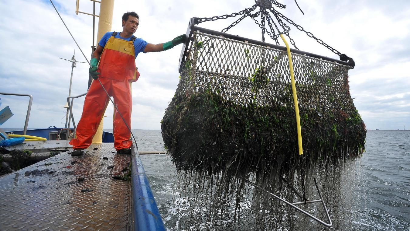 lille: on vous emmène à la pêche aux moules qui vous seront servies