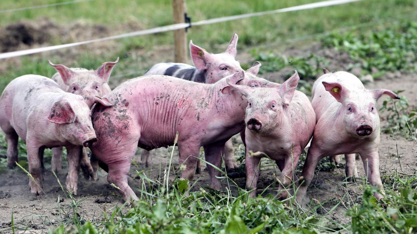 Ministere De Lagriculture Un Plan De Bataille Contre La Peste Porcine Africaine