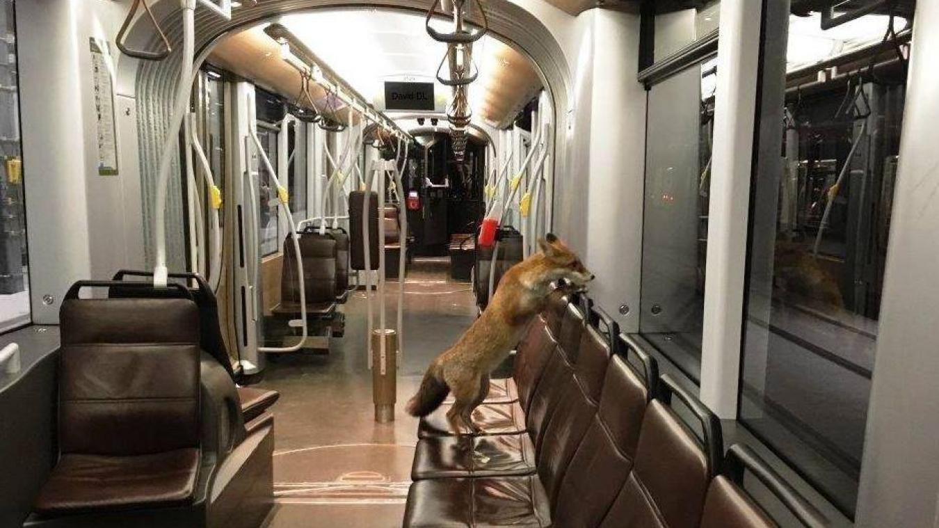 comment trouver des cougars bruxelles