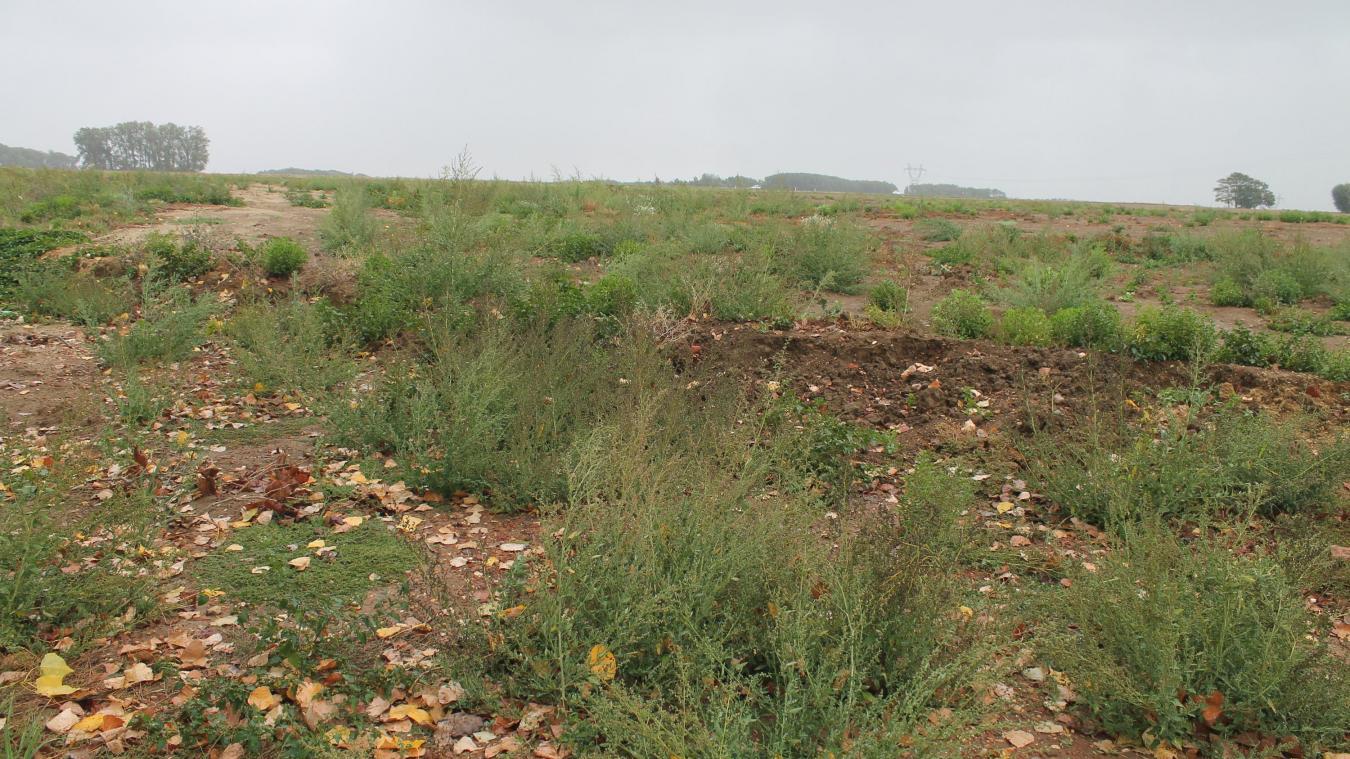 Douchy Les Mines Les Travaux Concernant La Zac Des Prouettes Vont