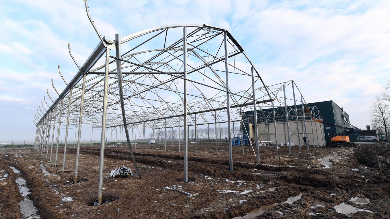 Que Planter En Octobre Sous Serre innovation une entreprise locale va faire pousser de la