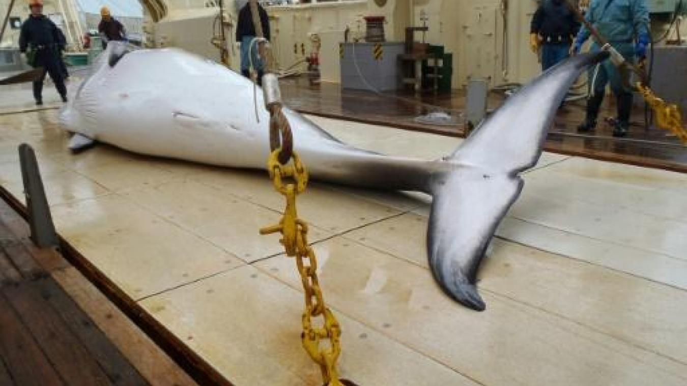 Pourquoi le Japon va reprendre la chasse commerciale à la baleine