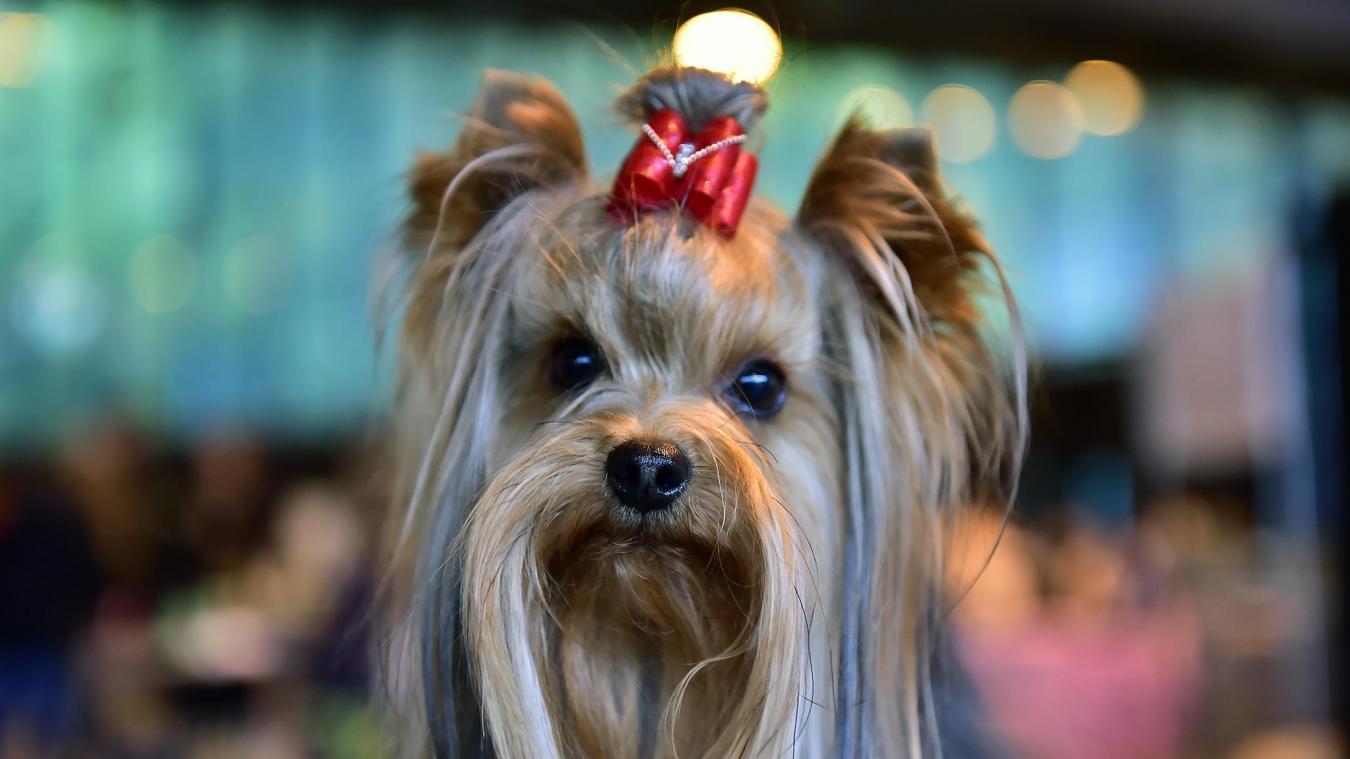 """Résultat de recherche d'images pour """"expo canine mouscron supresse"""""""