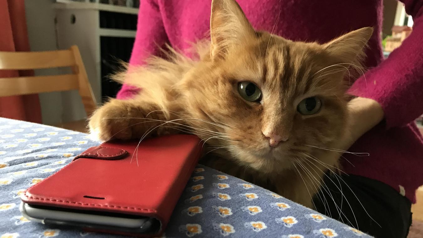 Un chat qui s'était égaré rentre chez lui en covoiturage — Nord