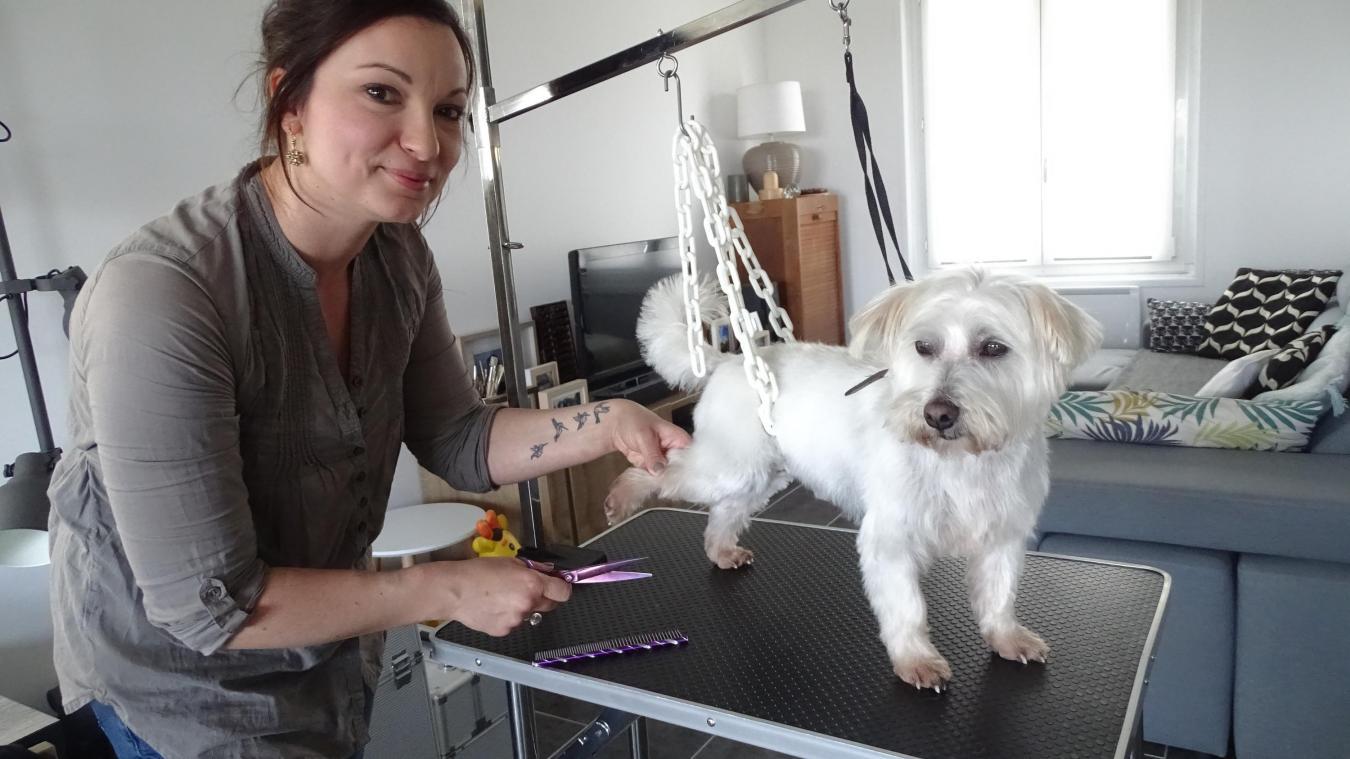Verquin : Lucile est devenue toiletteuse pour chien à domicile