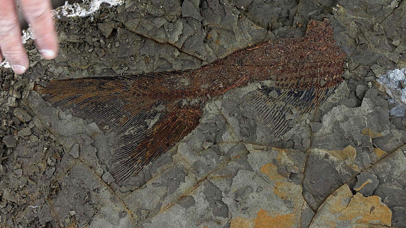 Les Fossiles Sont Extraordinairement Preserves En Trois Dimensions Au Lieu Detre Aplatis