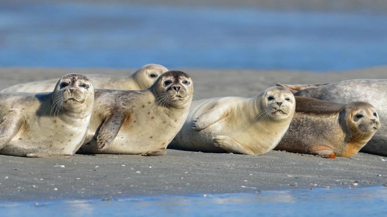 À Étaples, le Parc naturel marin fait un premier point sur le ...