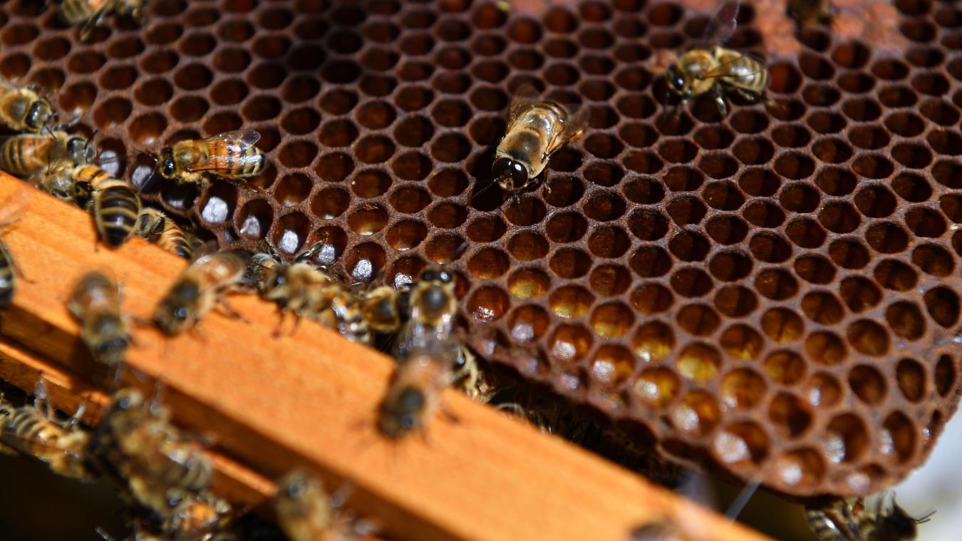 Incendie à Paris: Les abeilles de Notre-Dame ont survécu - Monde