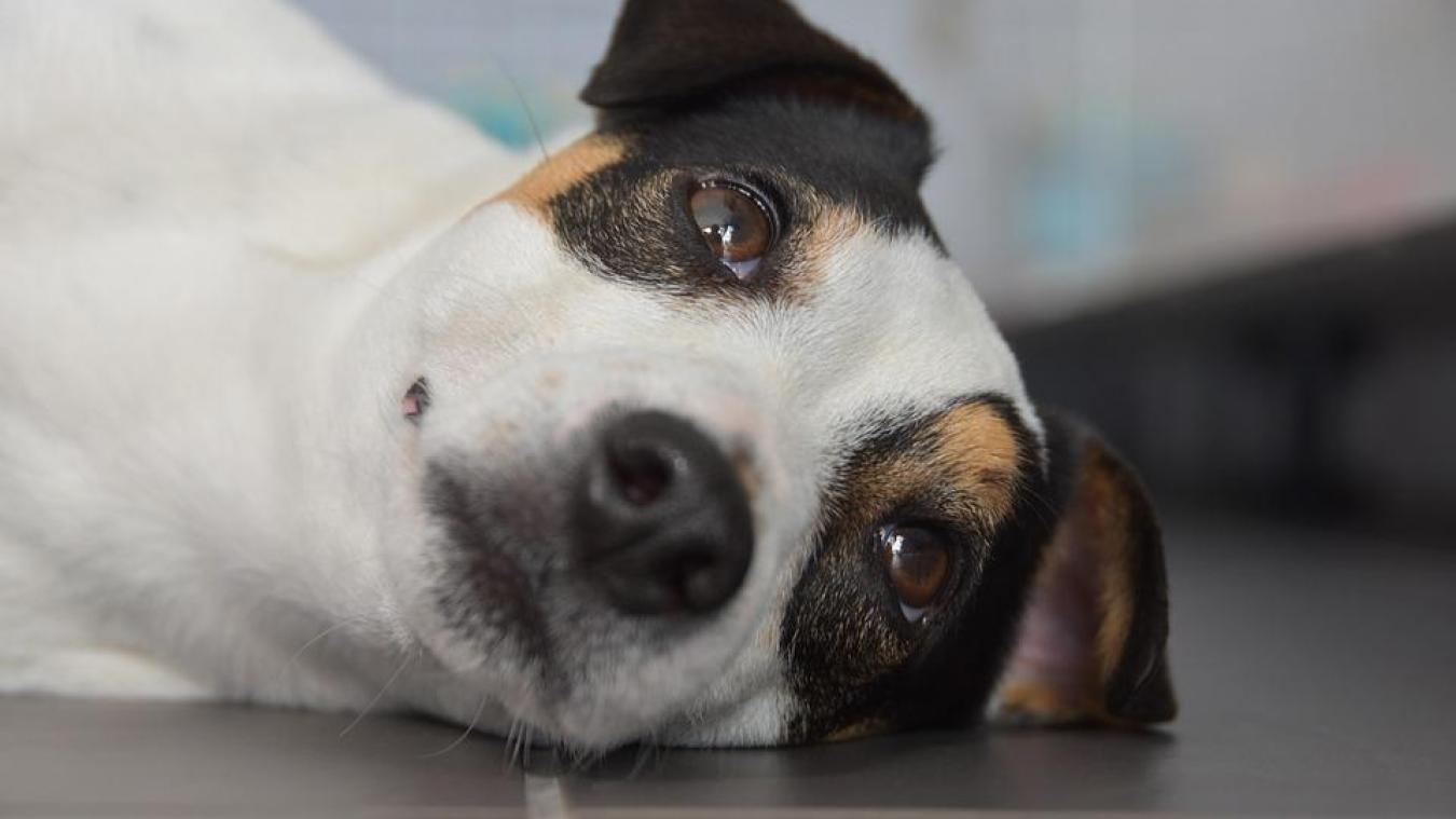Le secret derrière le regard attendrissant du chien