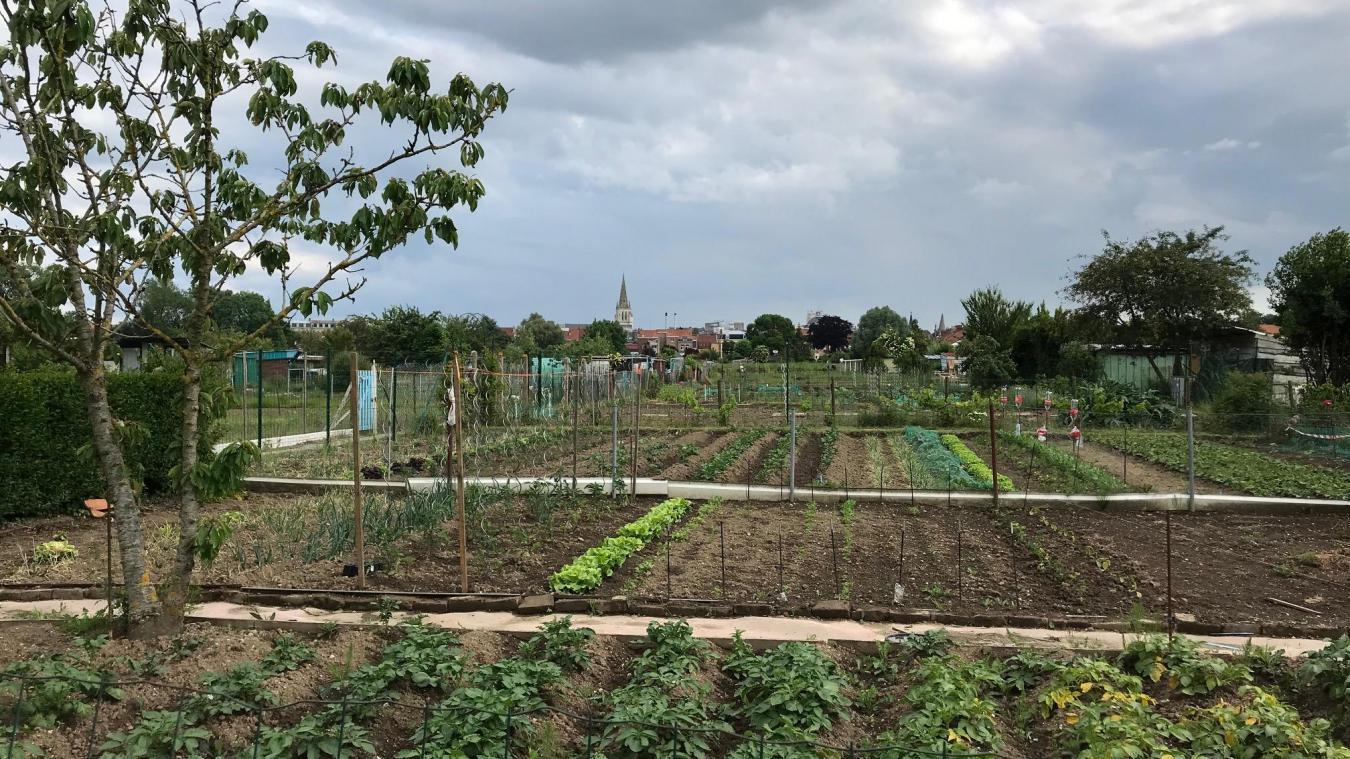 Jardin Ouvrier Le Havre saint-omer le vrai-faux sur les jardins familiaux de la ville