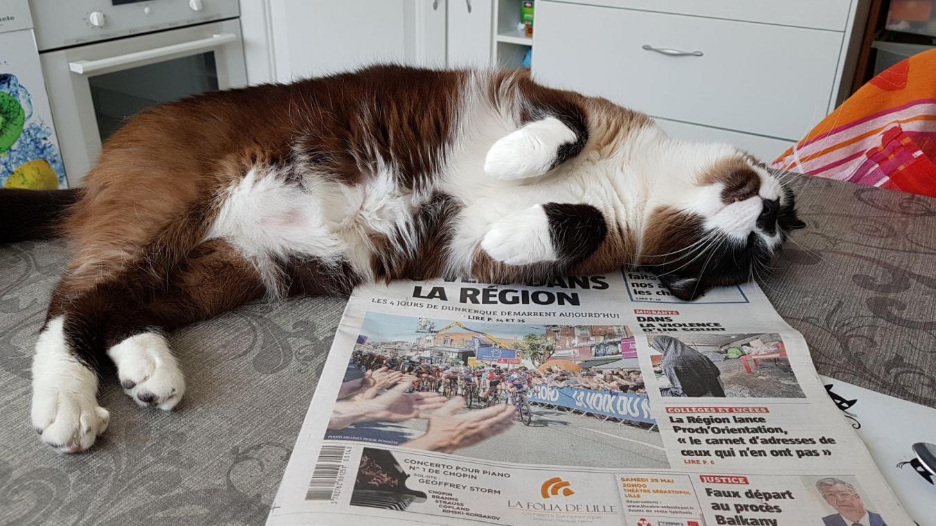 Tous les chats de Sylvie sont des chats secourus. Aujourd\u0027hui, ils vivent