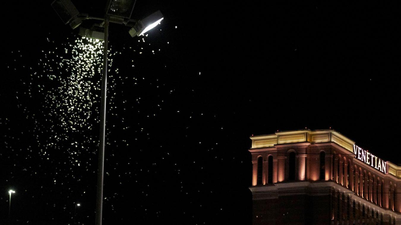 Panique à Las Végas, des millions de sauterelles envahissent les rues