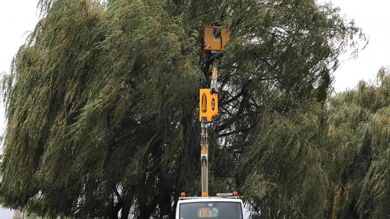 précédent Un gros nid de frelons asiatiques détruit à Hazebrouck - La Voix du Nord
