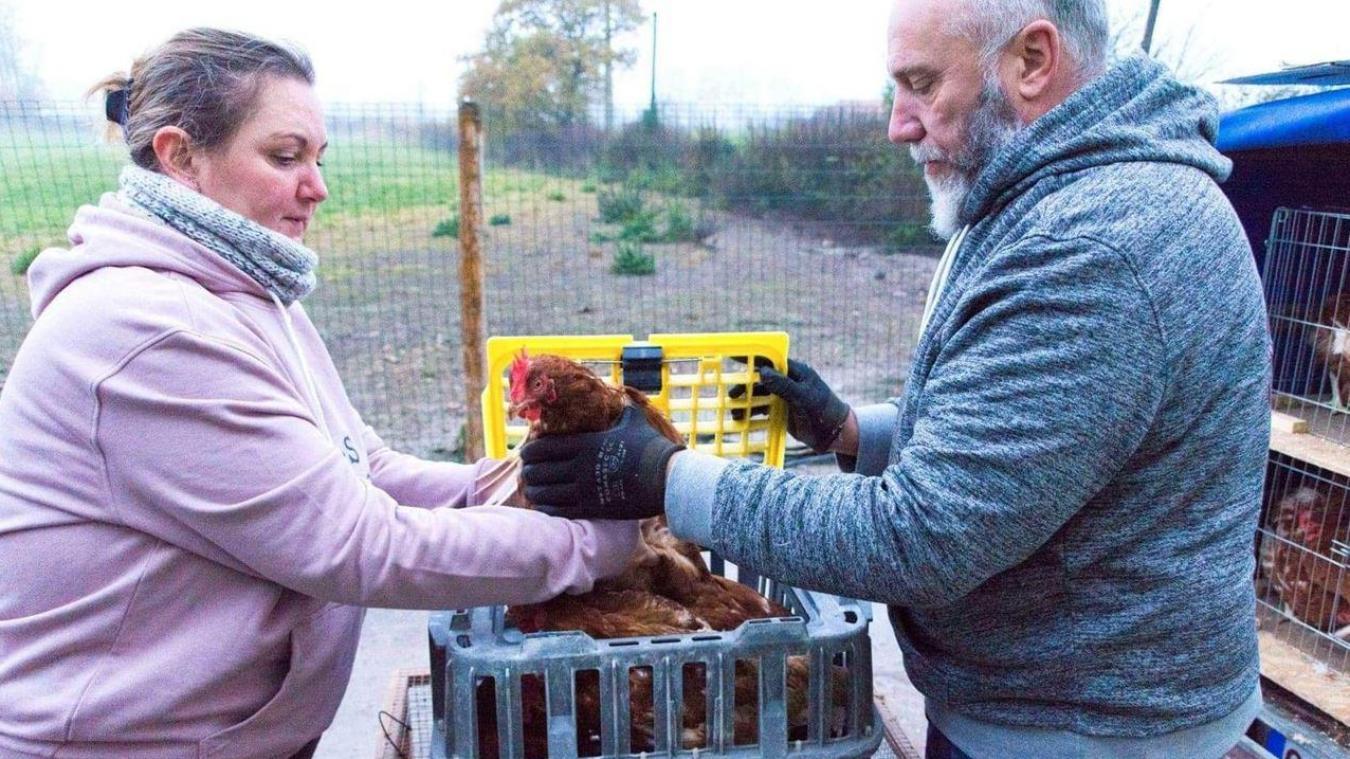 précédent Des poules à adopter à Saint-Omer, Aire-sur-la-Lys et Dennebrœucq - La Voix du Nord