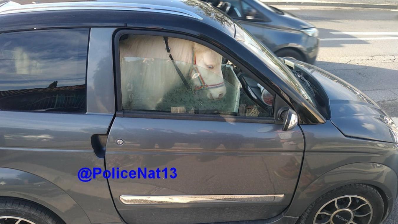 Elle transporte son poney dans sa voiture sans permis