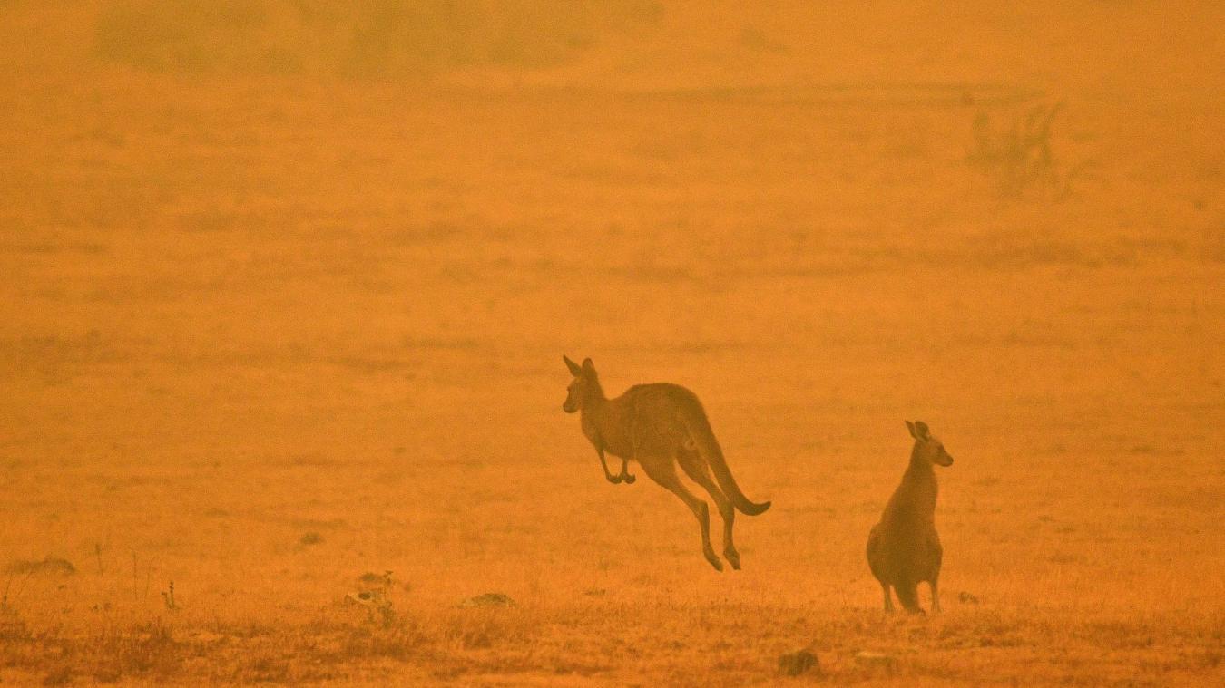 Australie 500 Millions D Animaux Sont Morts Dans Les Flammes