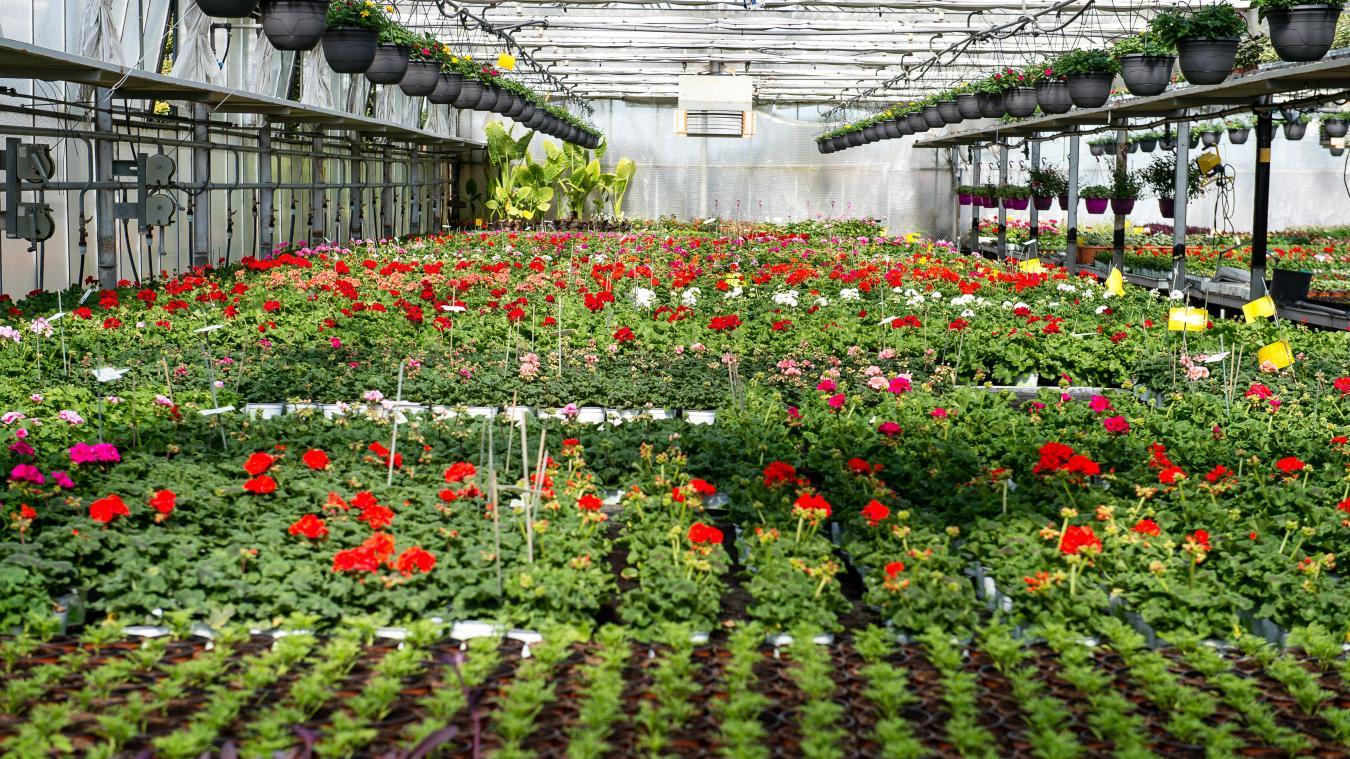 Confinement La Jardinerie N Est Pas Une Sortie Autorisee
