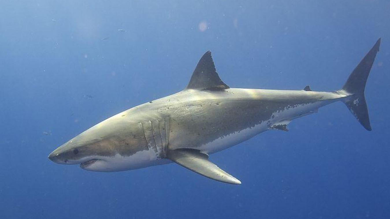 Australie: un surfeur français a survécu à une attaque de requin