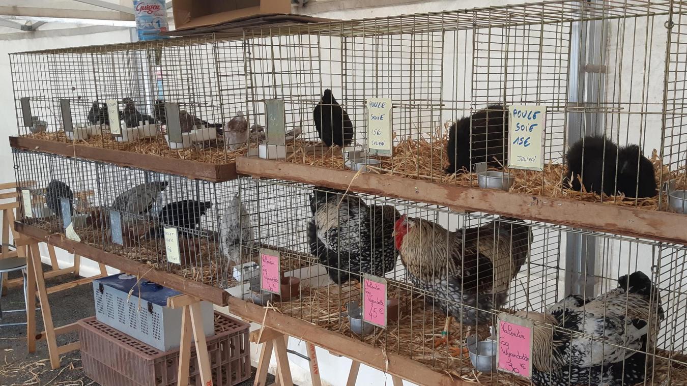 Calendrier Des Expositions Avicoles 2022 Haussy: une exposition avicole en lieu et place de la fête des