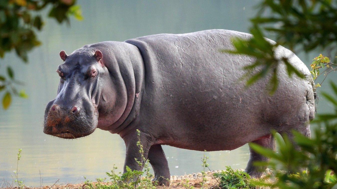Le rapport alarmant de la WWF sur la biodiversité — Animaux sauvages