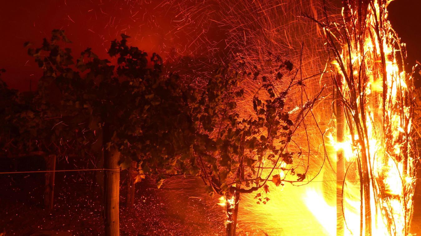 Un incendie géant ravage la Napa Valley (USA) — Vignobles