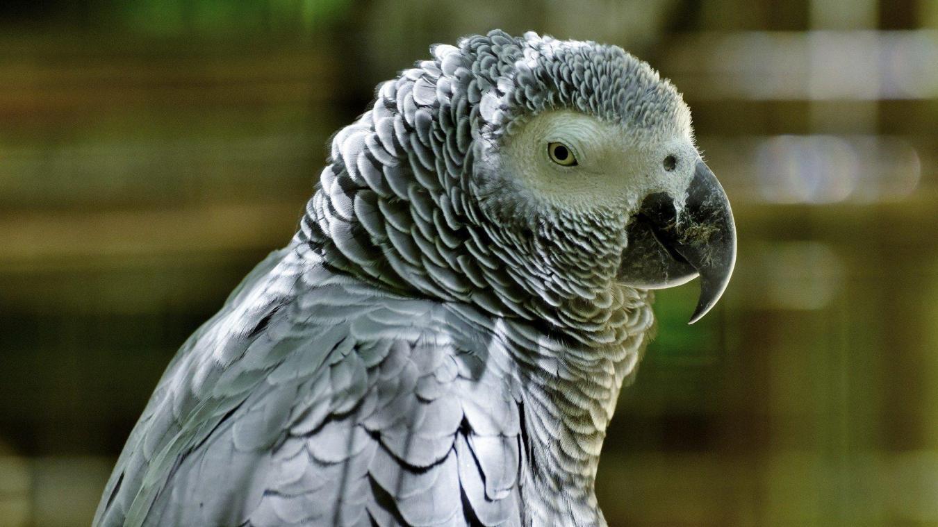 Cinq Perroquets Proferant Des Insultes Contre Les Visiteurs D Un Zoo Ont Ete Mis A L Ecart